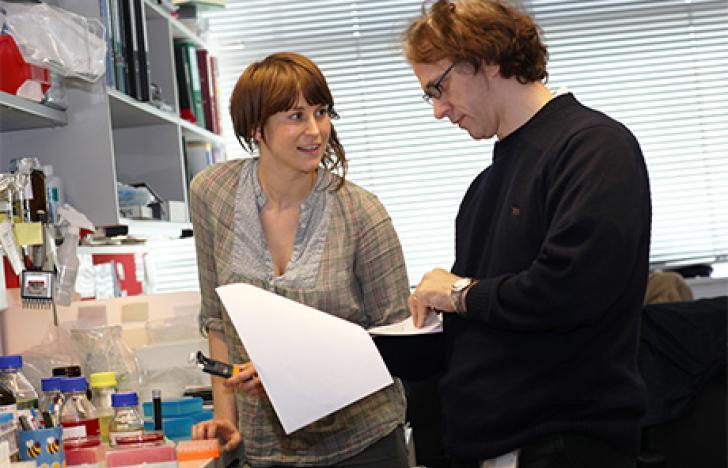 Neues Zentrum für Stammzellforschung