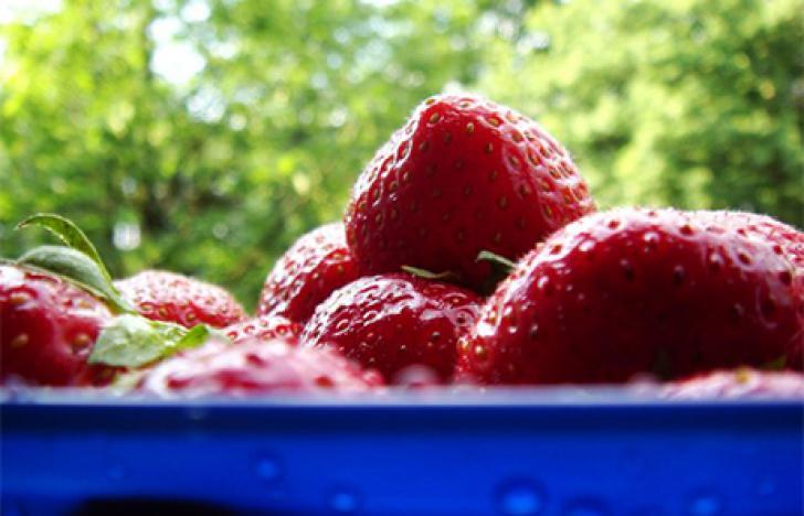 Mit dem Smartphone zur Erdbeere