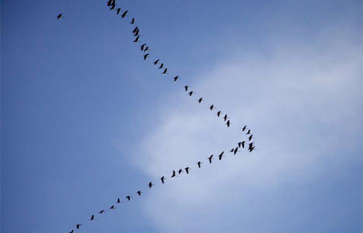Fliegende Internetpioniere