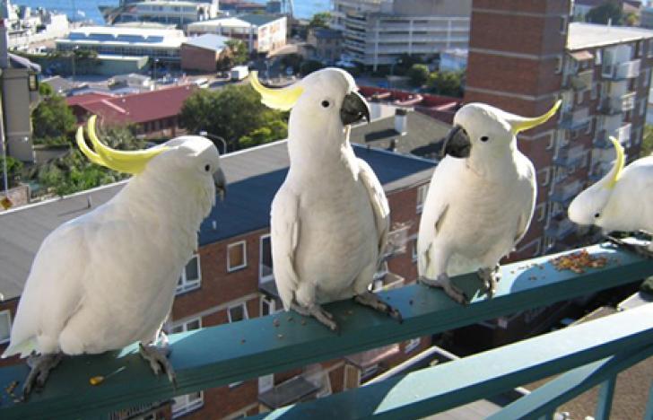 Die Vögel mit dem Werkzeugkasten