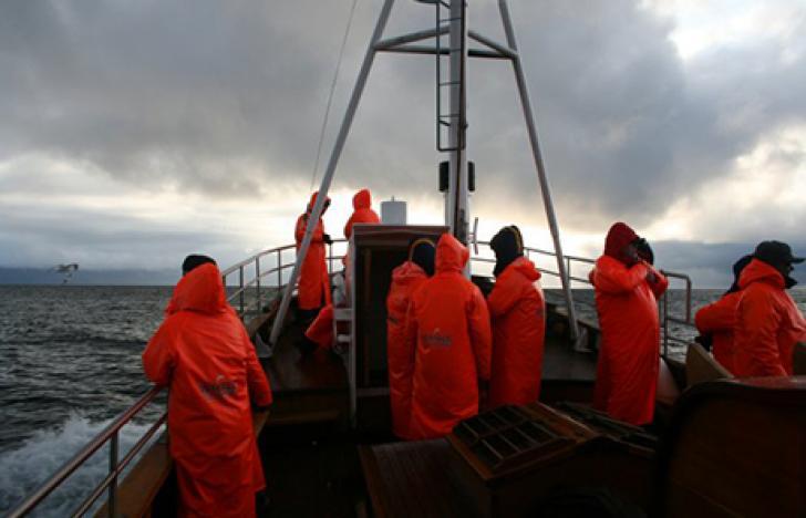 Das unbekannte Leben im arktischen Meer