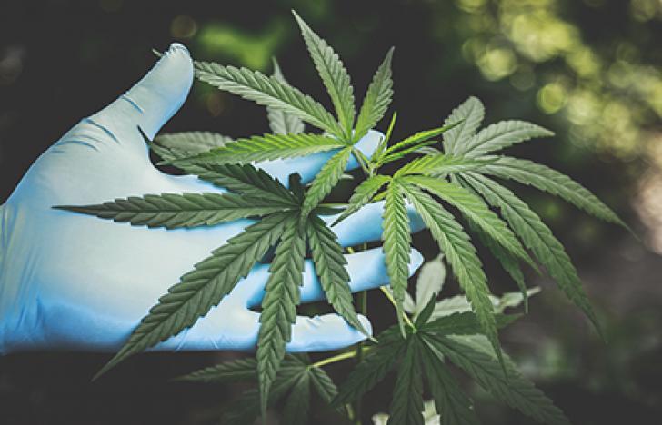 Steigende Cannabis-Nachfrage in Corona-Krise